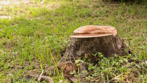 Stump Grinding: The Process and Benefits