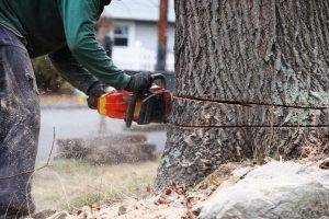 What Is a Tree Surgeon and Why You Should Hire One