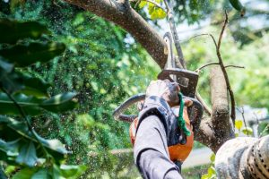 When Is the Right Time to Remove A Tree?