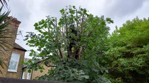 7 Signs You Need to Call a Tree Surgeon