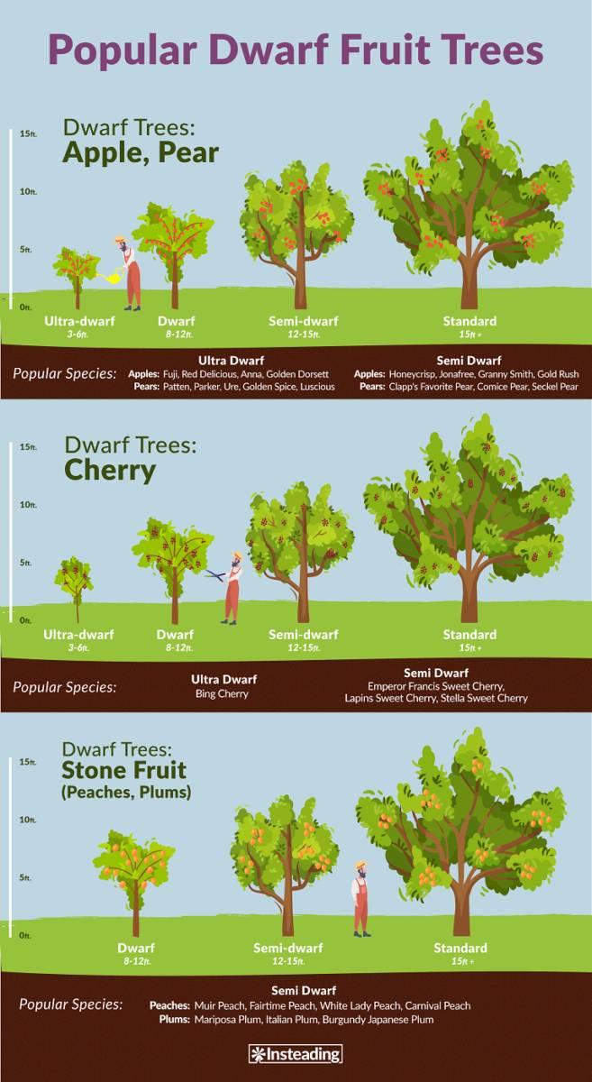 dwarf-fruit-trees