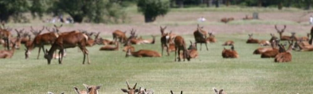 Wildlife in Richmond Park