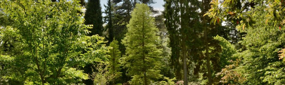 A Guide to British Tree Species