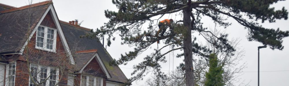 British Standard for Tree Work BS 3998 2010