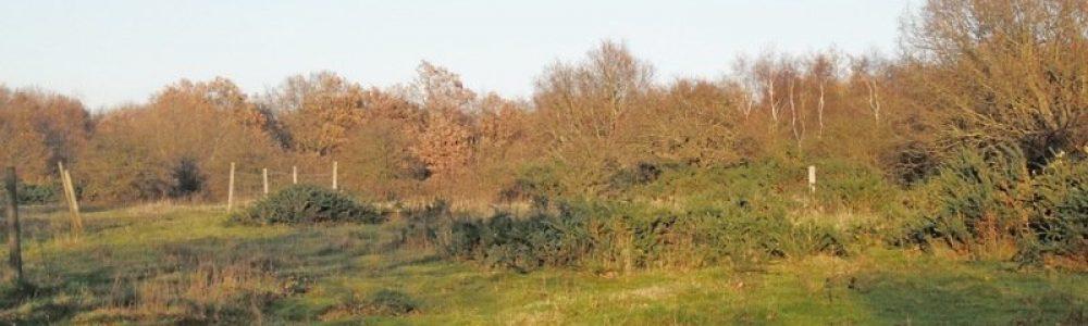 epsom-common-nature-reserve