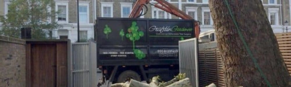 How to find a Qualified Tree Surgeon in London