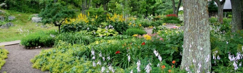 The Best Tree for Your Garden and Climate