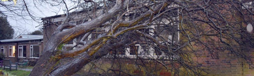 Tree Emergencies