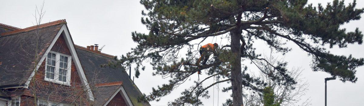 Tree Pruning London Header