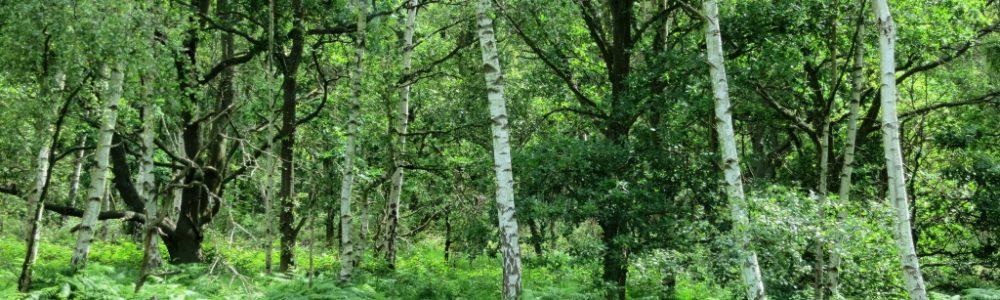Tree Species Wimbledon