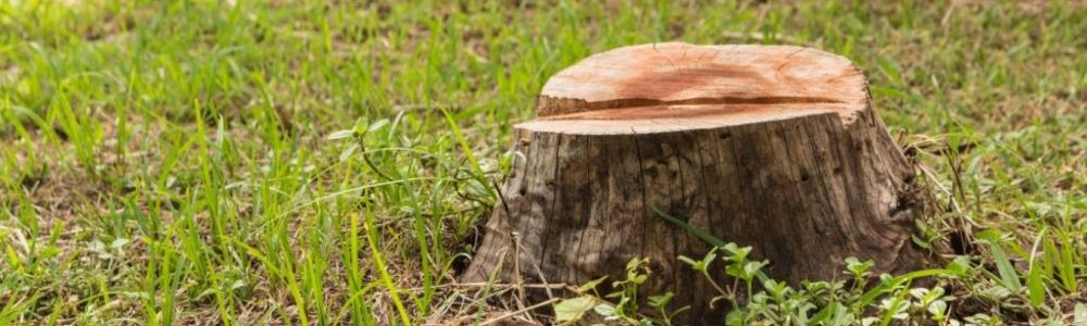 Tree Stump Grinding - The Process and Benefits