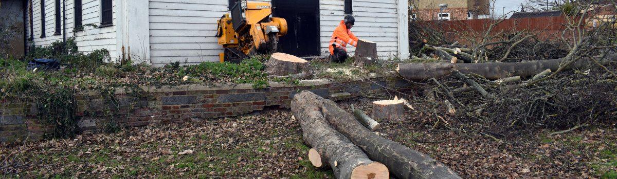 Tree Surgeons South London Header
