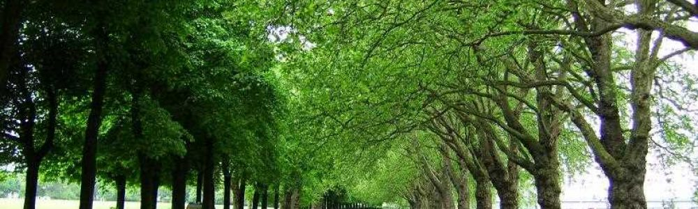 Green Spaces Wandsworth