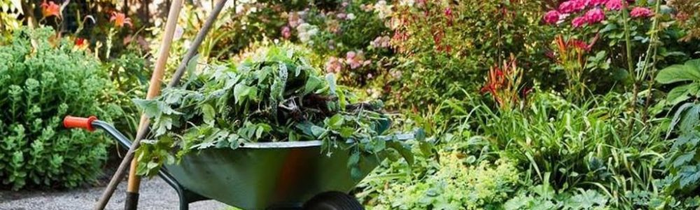 Ultimate Guide For Gardening