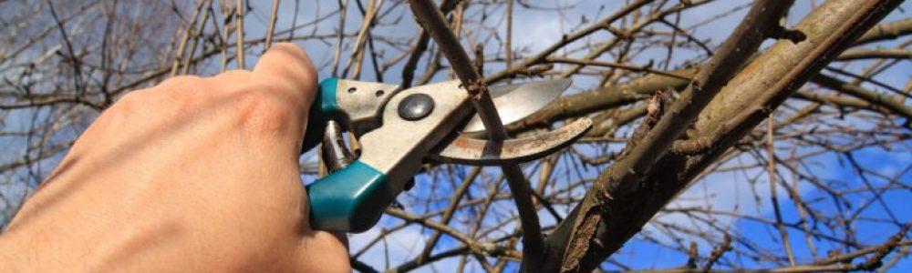 Winter Tree Pruning