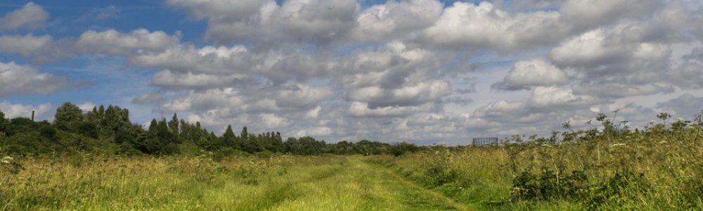 Wormwood Scrubs Grassland