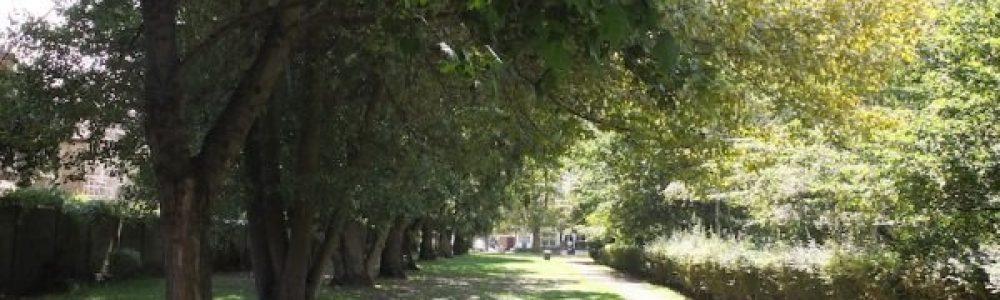 Ealing Trees