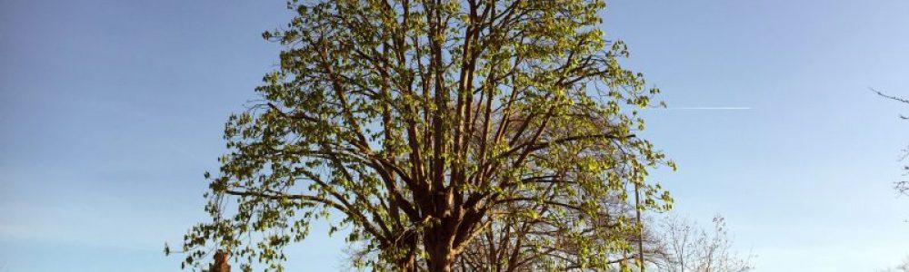 Tree Pruning: Various Methods Used to Prune a Tree