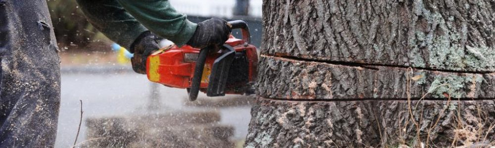 What Is a Tree Surgeon and Why You Should Hire One?