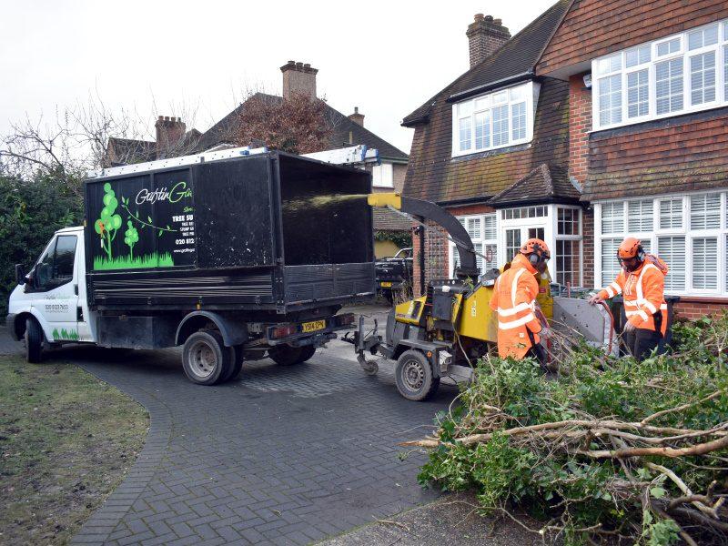 Tree Surgeons London